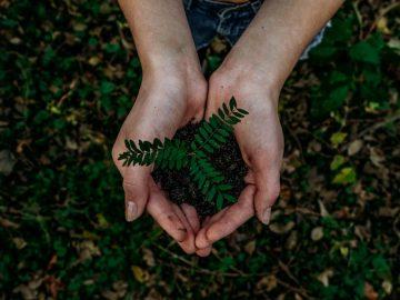 renewable green energy